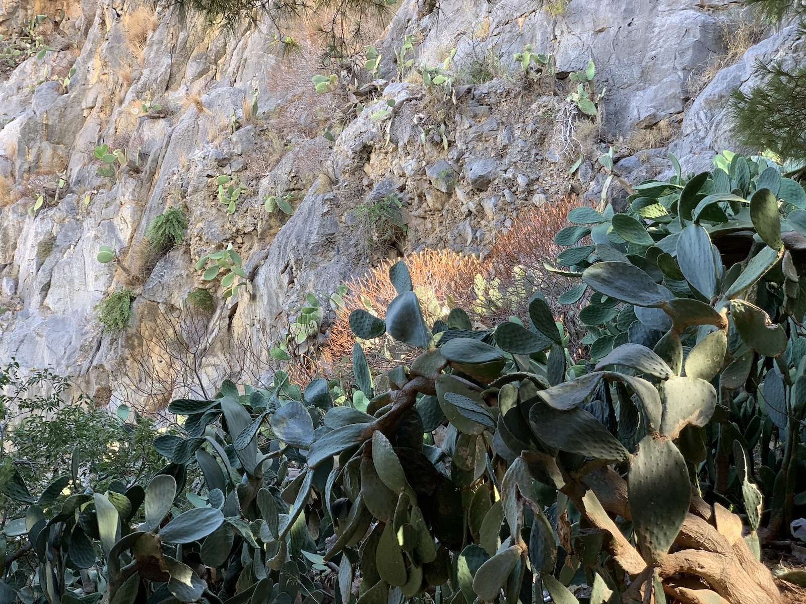 Kaktuszdzsindzsa a hegyre felfelé menet